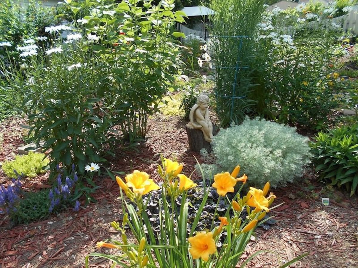 Little sitting angel surrounded by Daylillies, Shasta Daisies, Star Flower (not blooming yet) and silver mound ground cover