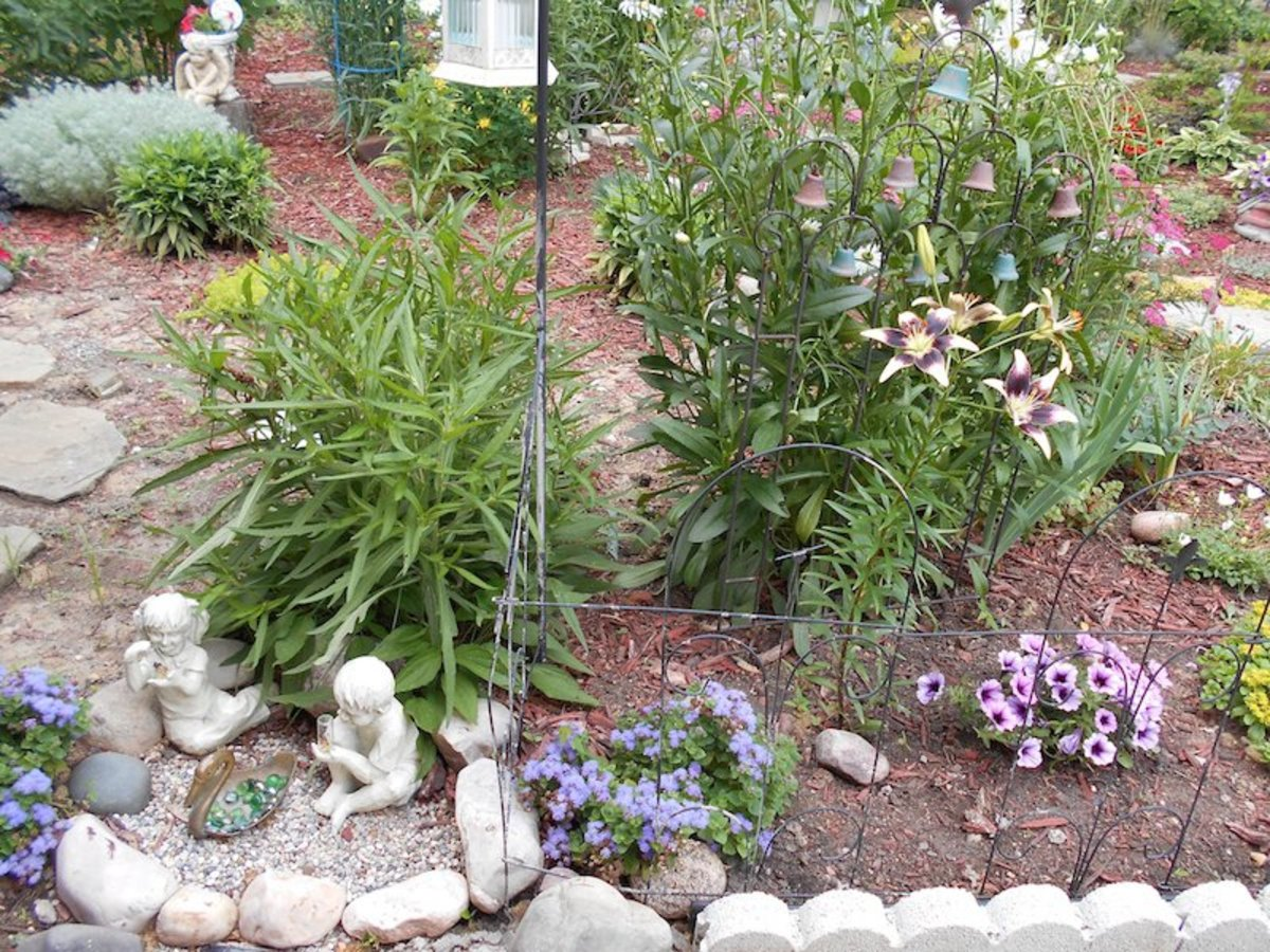 Welcome to my secret garden!