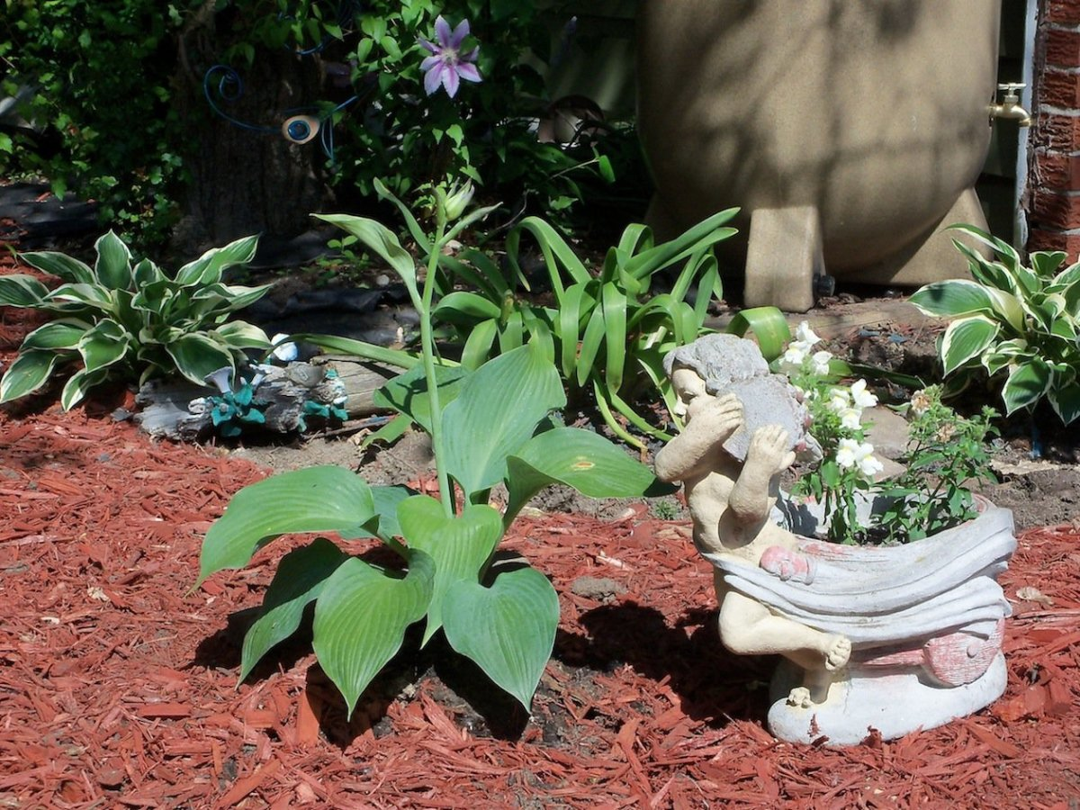 the hosta and huecheras have it made in the shade