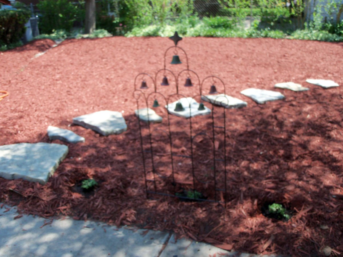 the first plantings were given to me by a friend. I set up a little bell trellis that I had