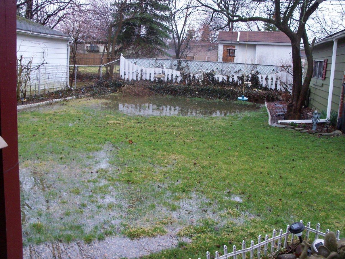 My backyard after a rainstorm