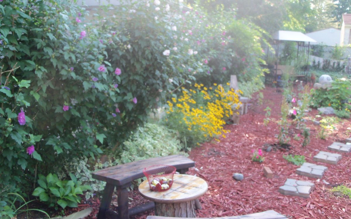 the rose of sharon shrubs provide a great natural privacy fence