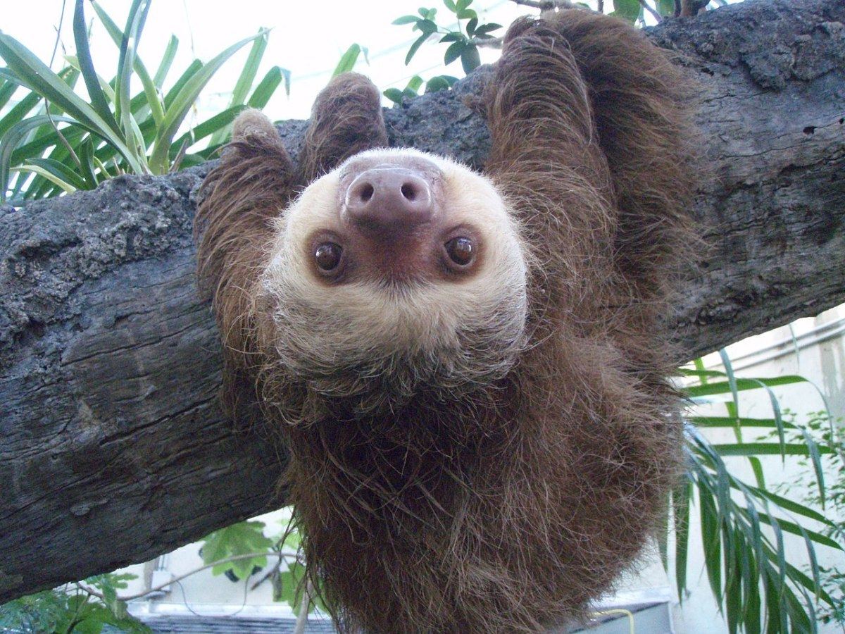 Sloth Saves the Day