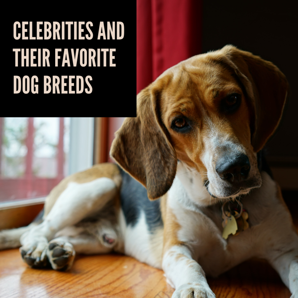 What breeds do some of our favorite celebrities love?