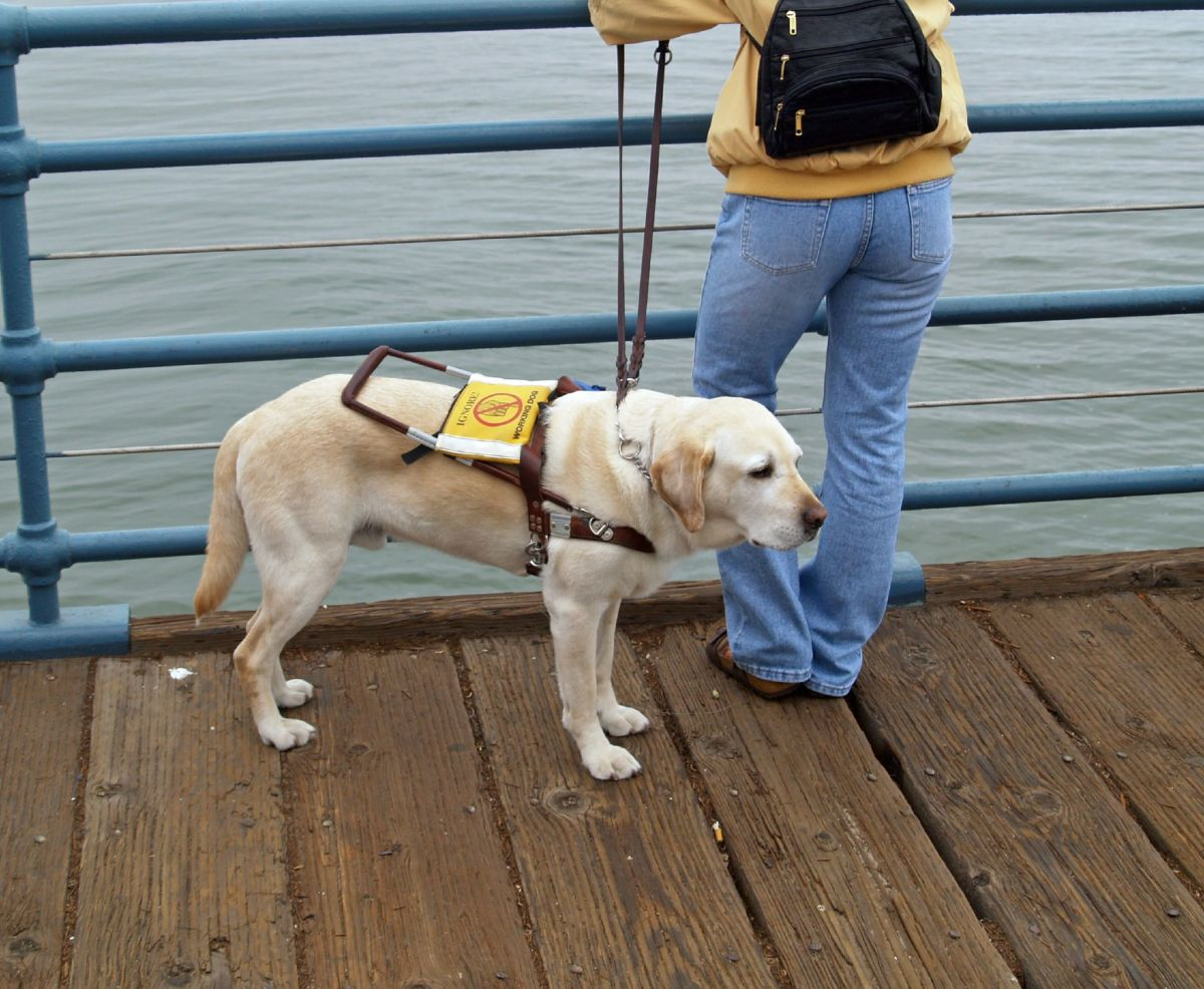 The ways dogs make a difference to our lives: various types of assistance dogs