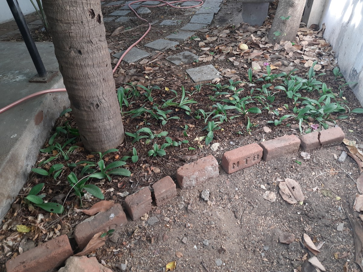 low-cost-ideas-to-spruce-up-your-garden