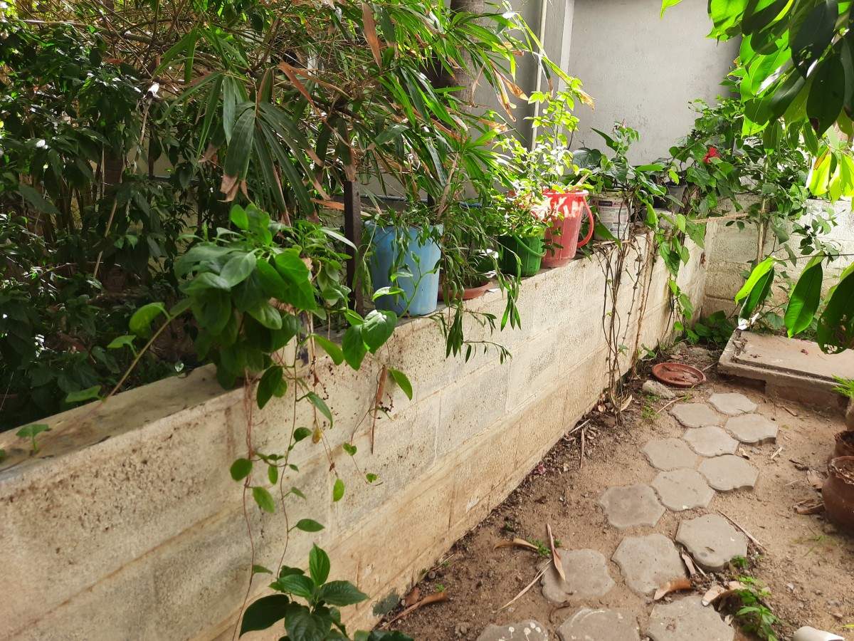 Plants on the compound wall