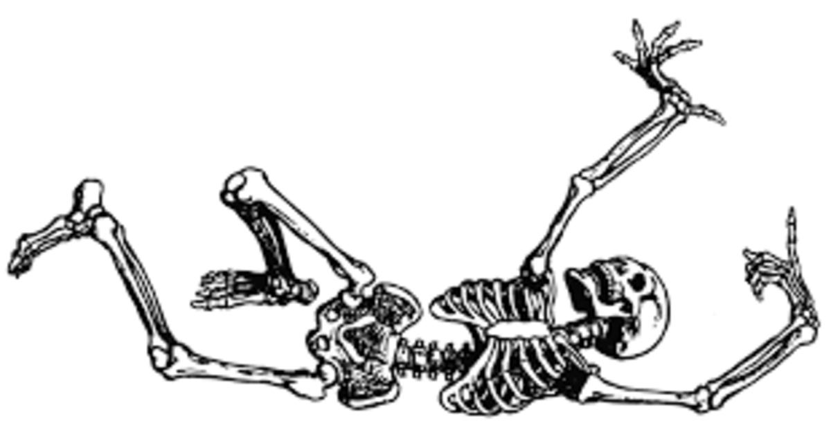 The Importance of Bones