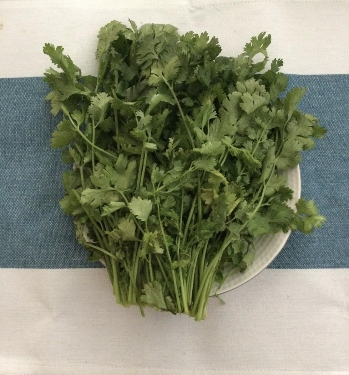My own home grown Coriander herb
