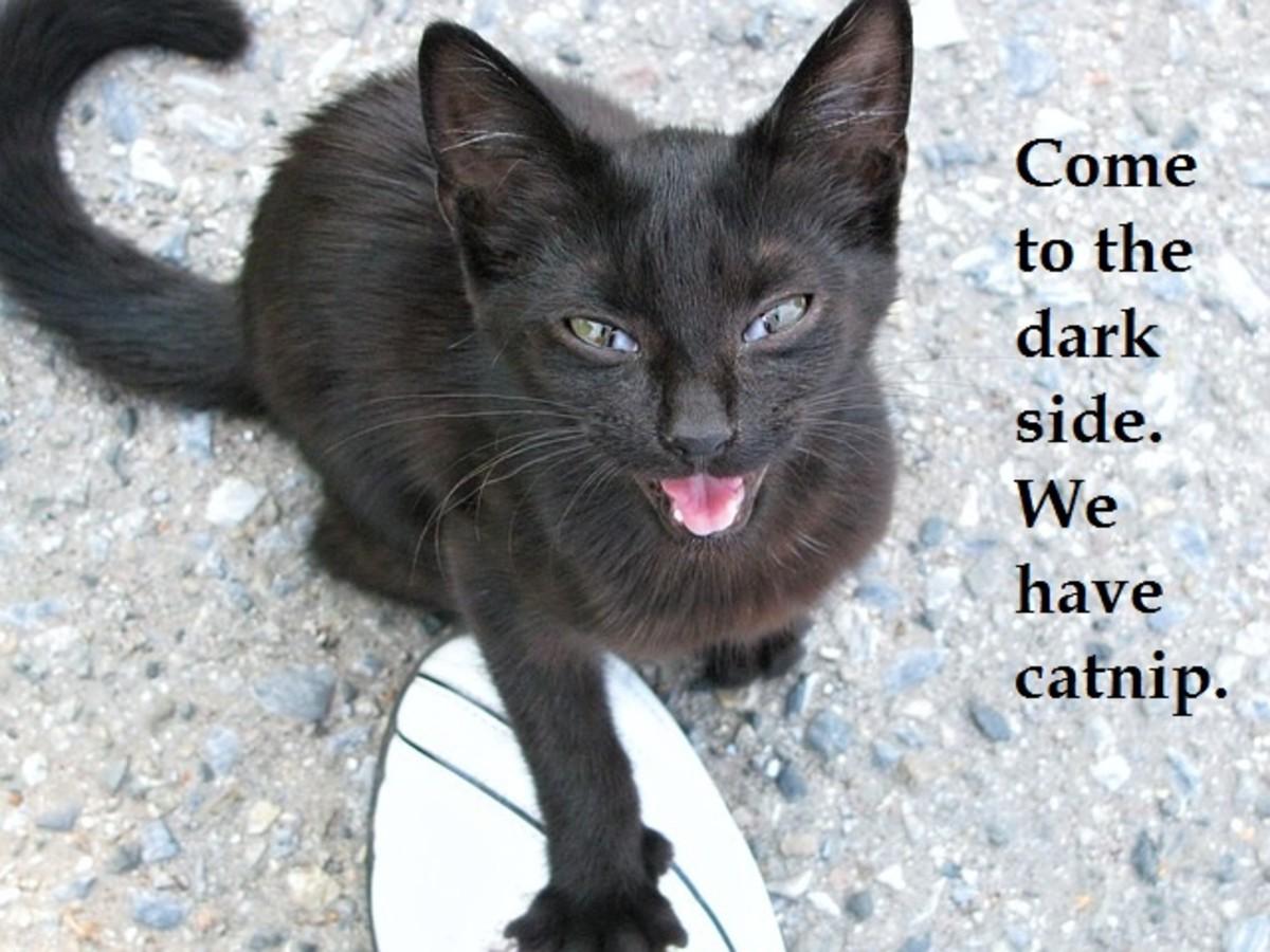 Dark Cat.