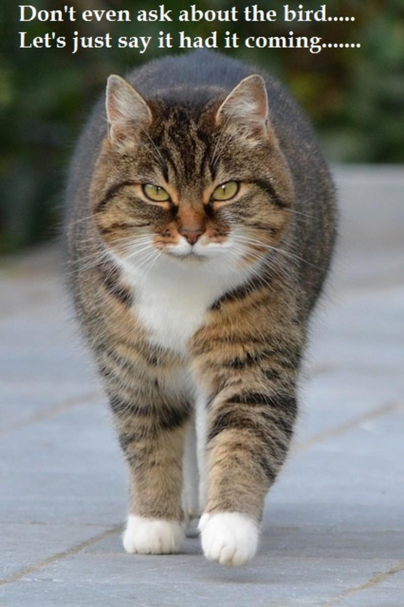 Cat ate the canary.  Source: http://pixabay.com/en/cat-animal-puss-pet-238394/