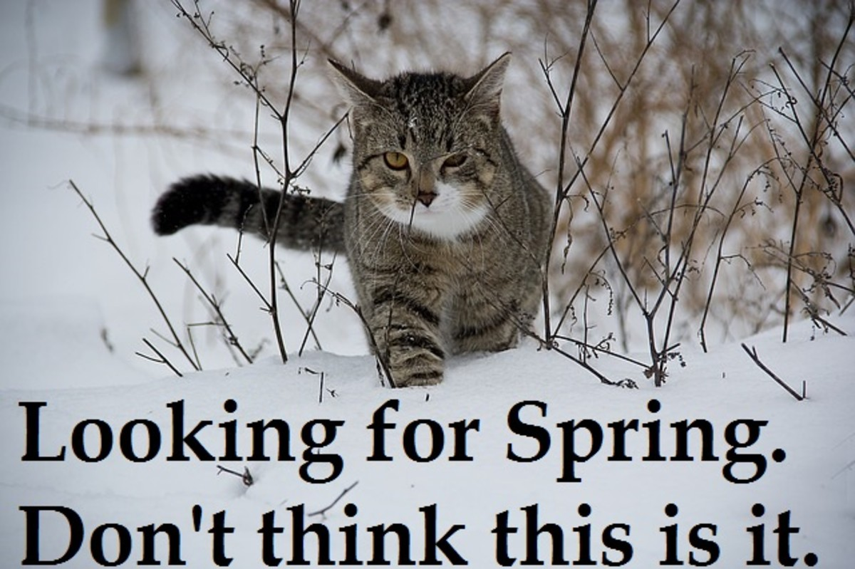 Cat wants warm weather meme.  Source: http://pixabay.com/en/cat-animal-snow-188088/