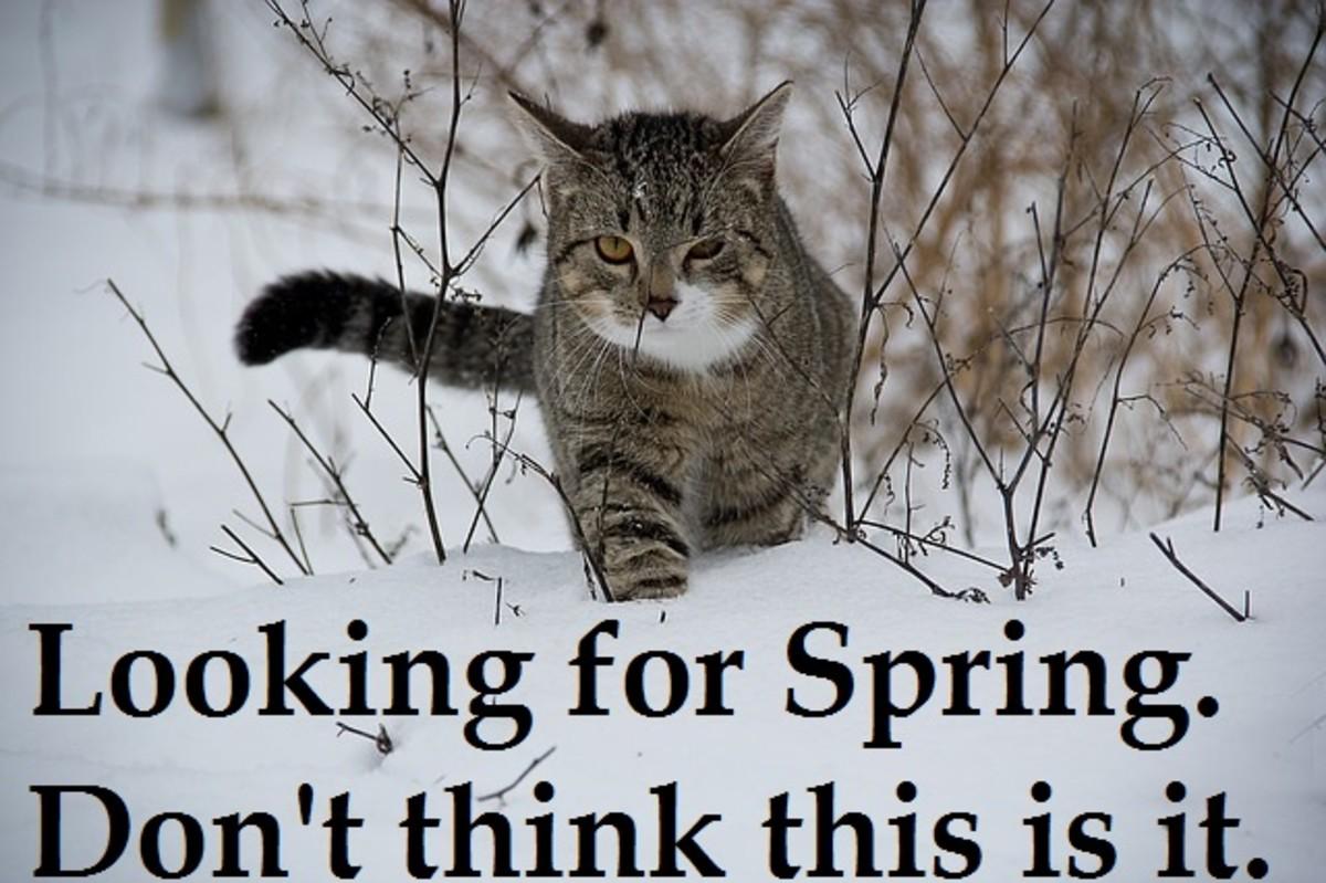 Cat wants warm weather meme.