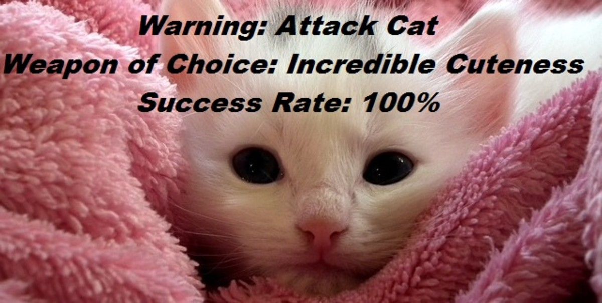 Attack cat meme  http://pixabay.com/en/kitten-cat-fluffy-cat-cute-animals-227009/