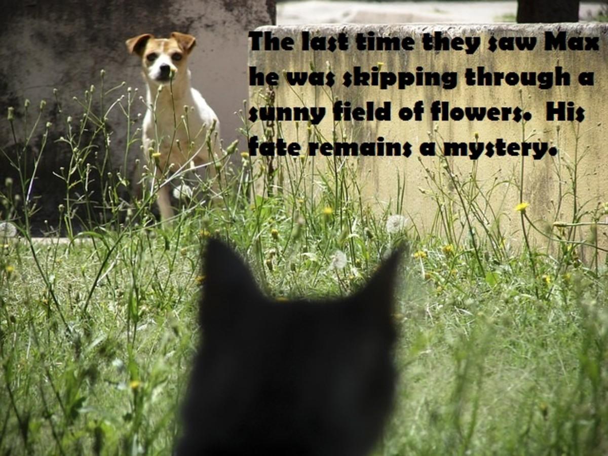 Sinister cat meme.
