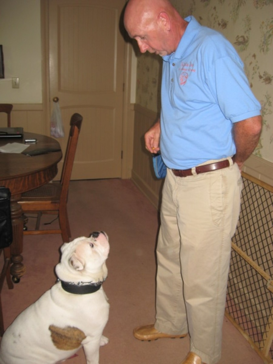 Bruno's Alpha Dog Training