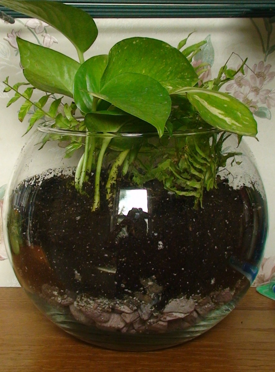 The completed open terrarium.