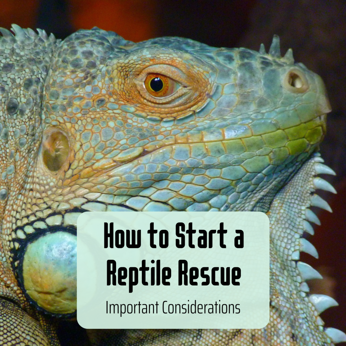If your dream is to start a reptile rescue or sanctuary, there are some important questions to ask yourself first.