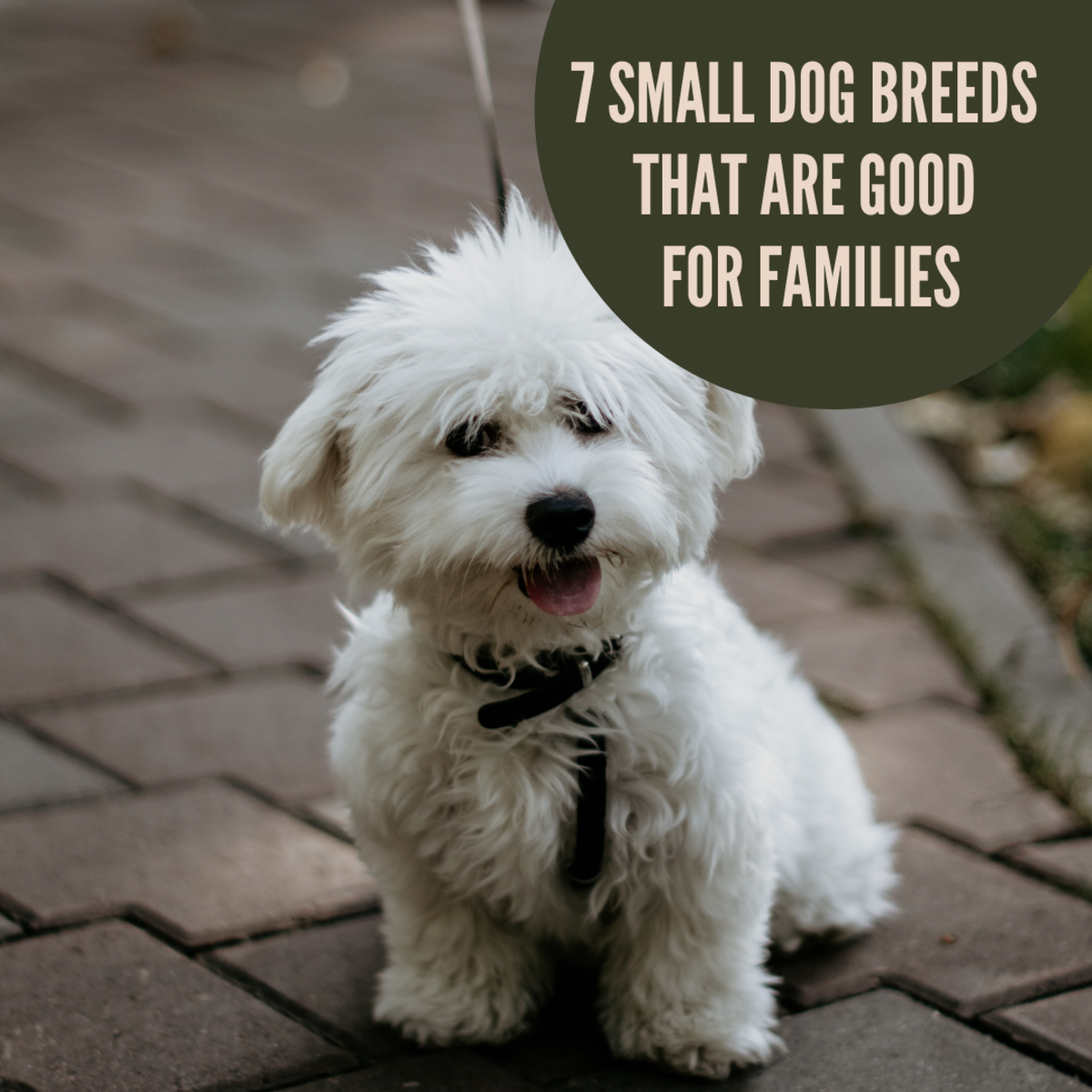 7 Small Dog Breeds That Are Great for Families (and a Few That Aren't)