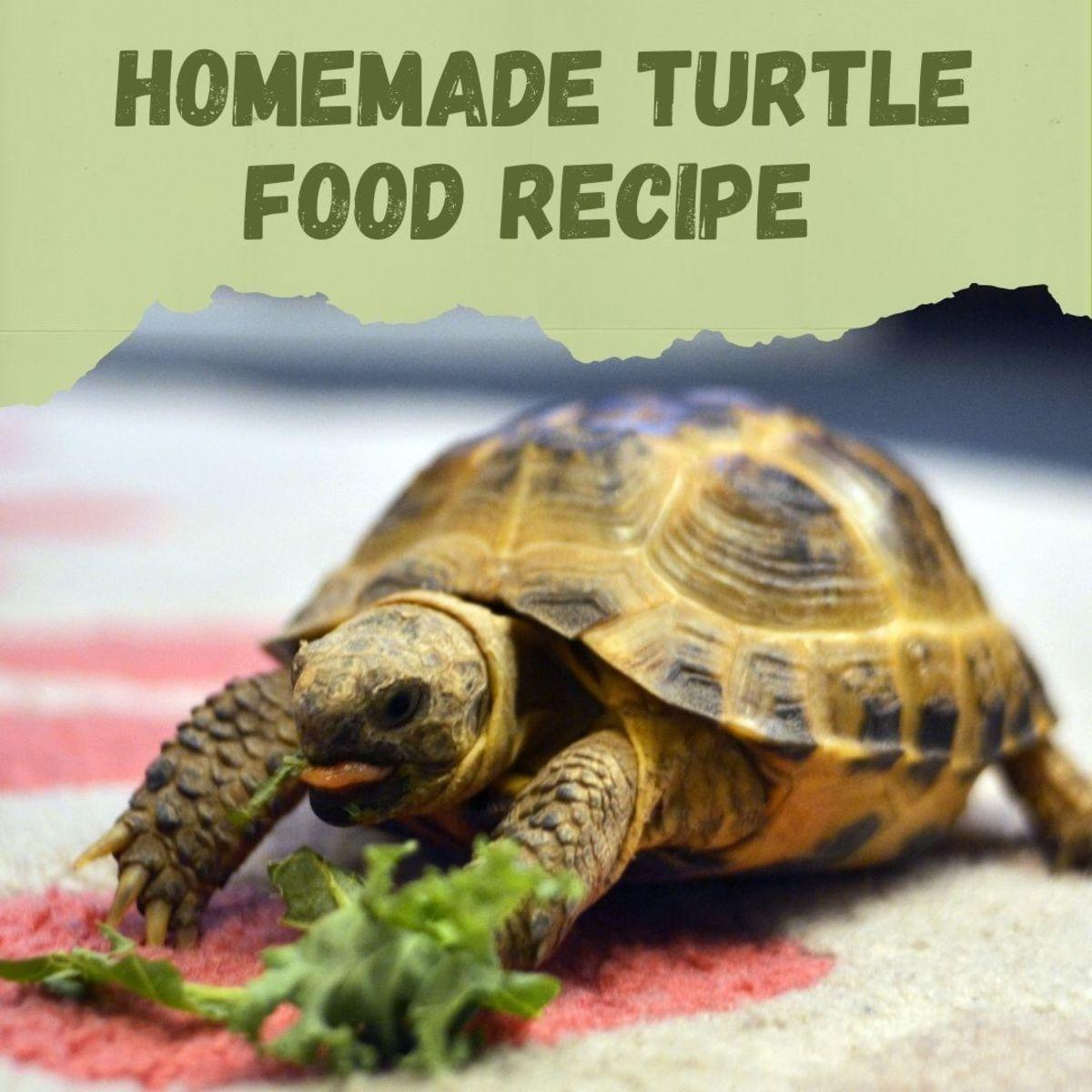 Homemade DIY turtle food recipe