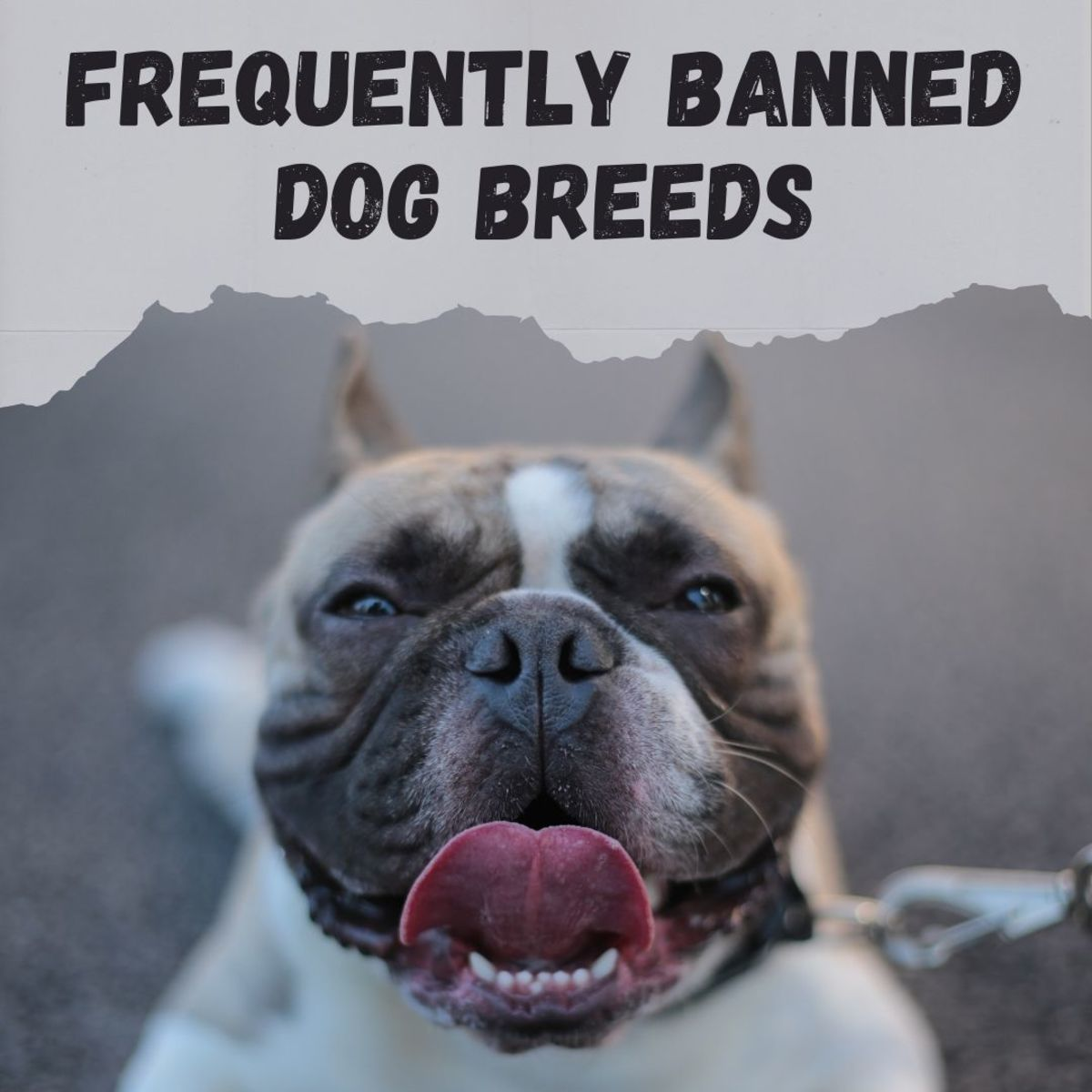 What are the most commonly banned dog breeds?
