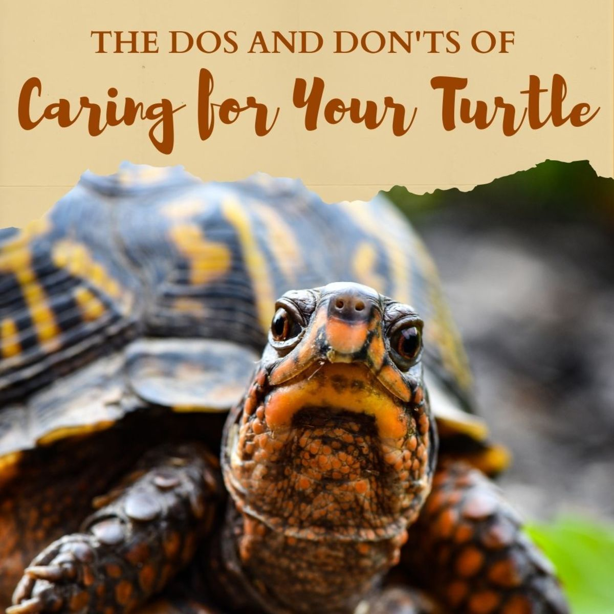 The Dos and Don'ts of Turtle Care