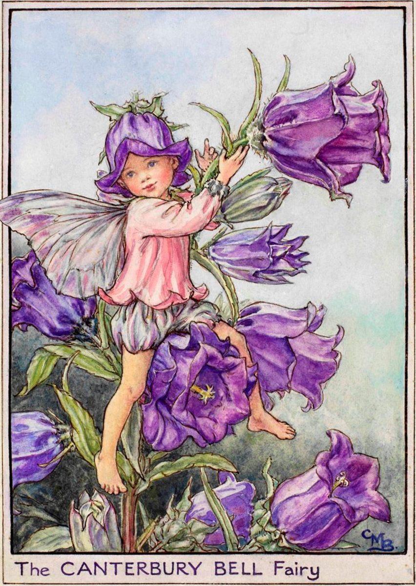Canterbury Bell Fairy