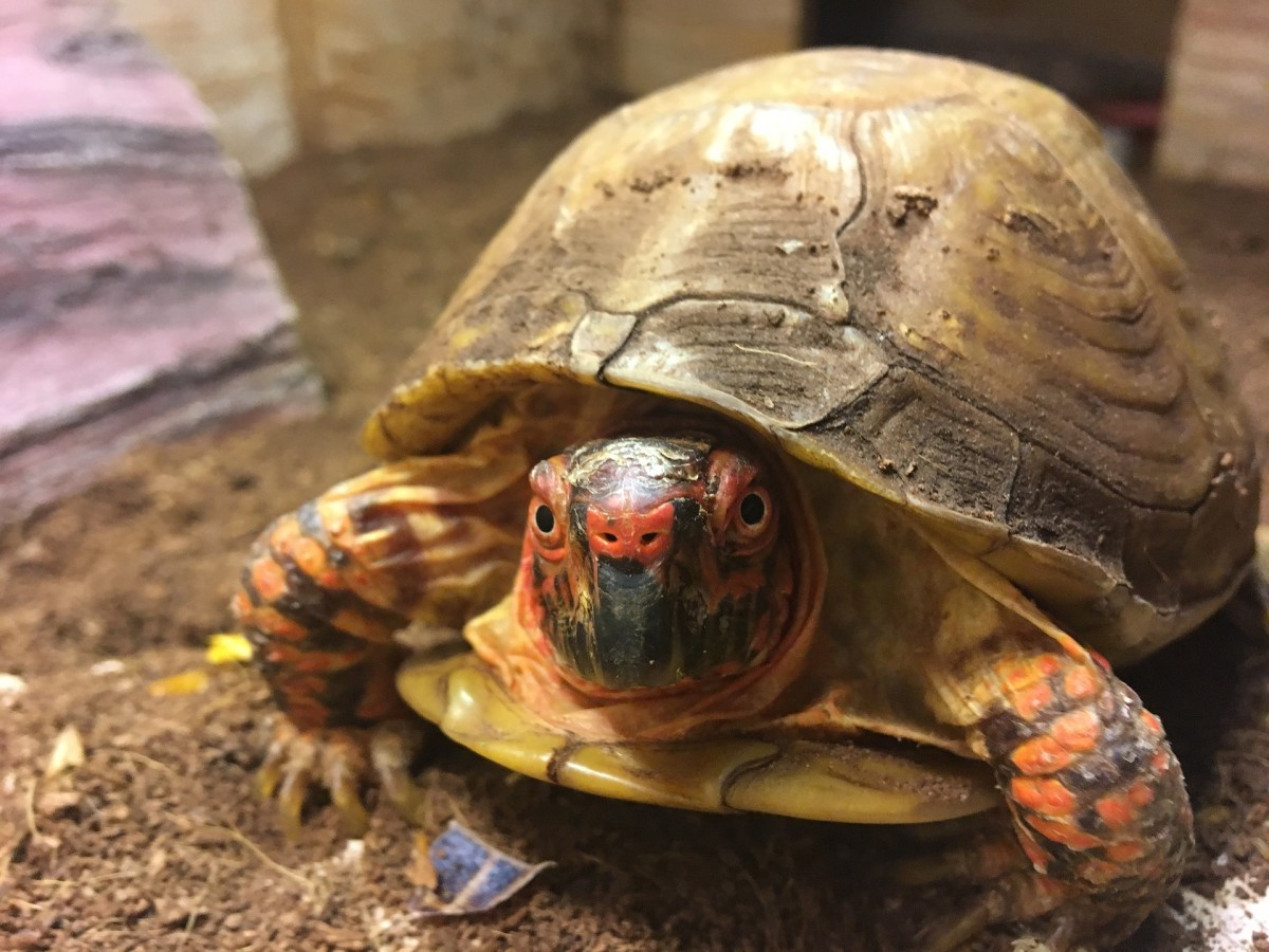 Turtles are sometimes perceived as easy pets for kids, but that's far from the truth.