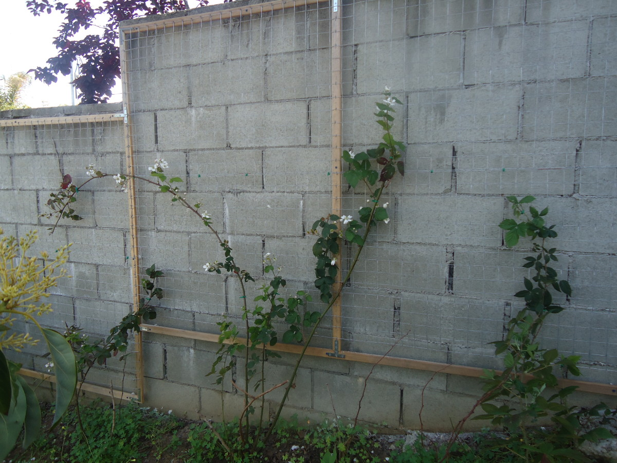 Introduction To Garden Wall Trellis