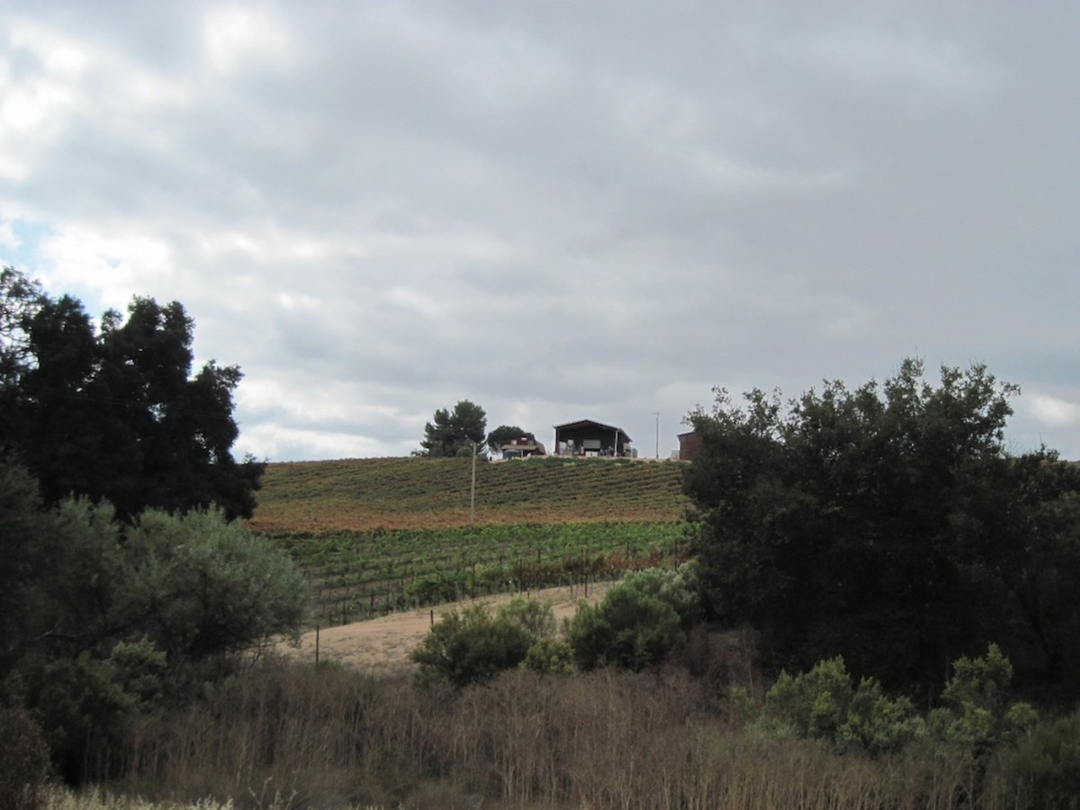 This is one of the first views of the Écluse Vineyard. The tasting room is only open on weekend afternoons.