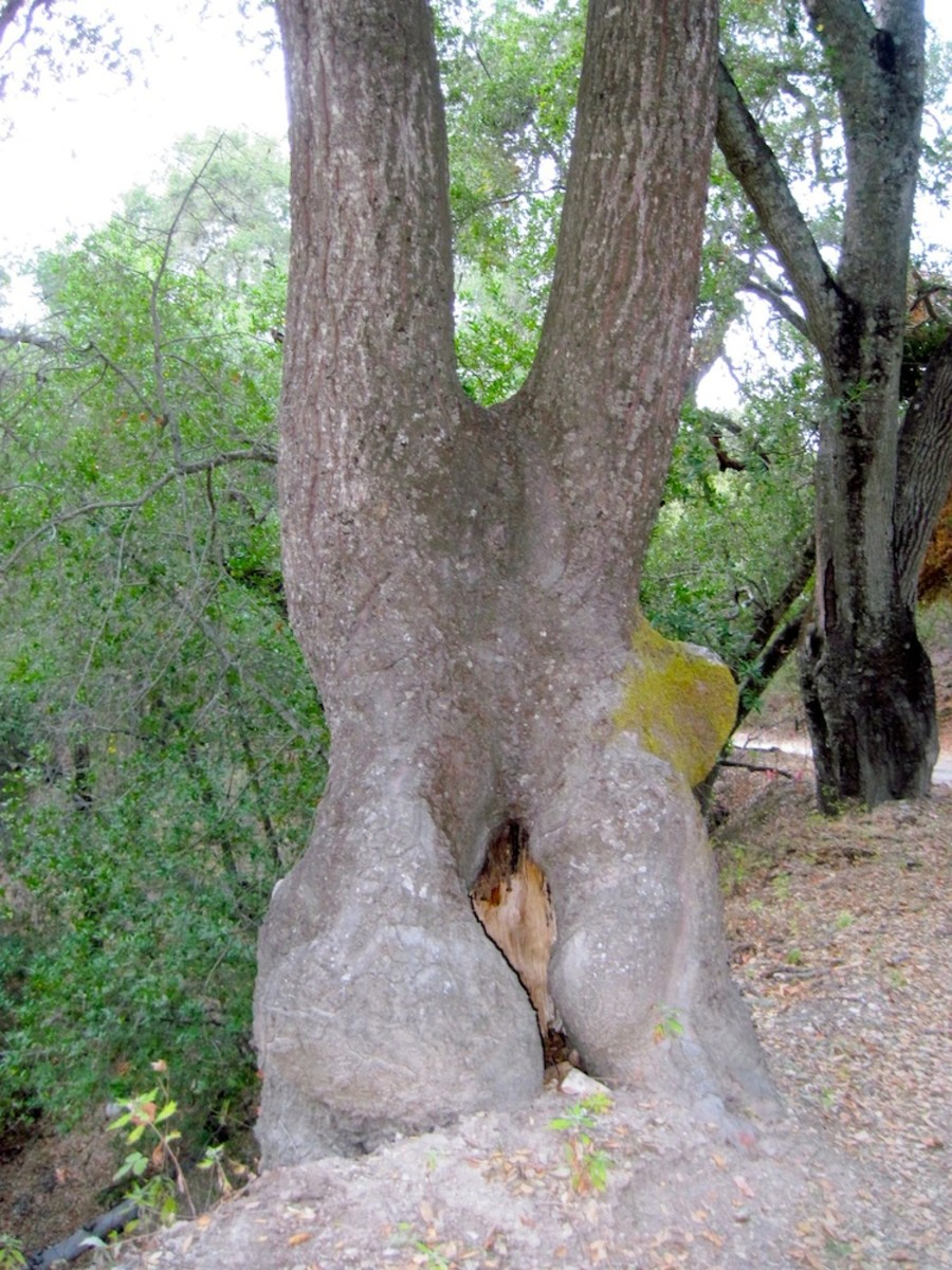 The bottom of this nature-sculpted tree could be interpreted many ways.