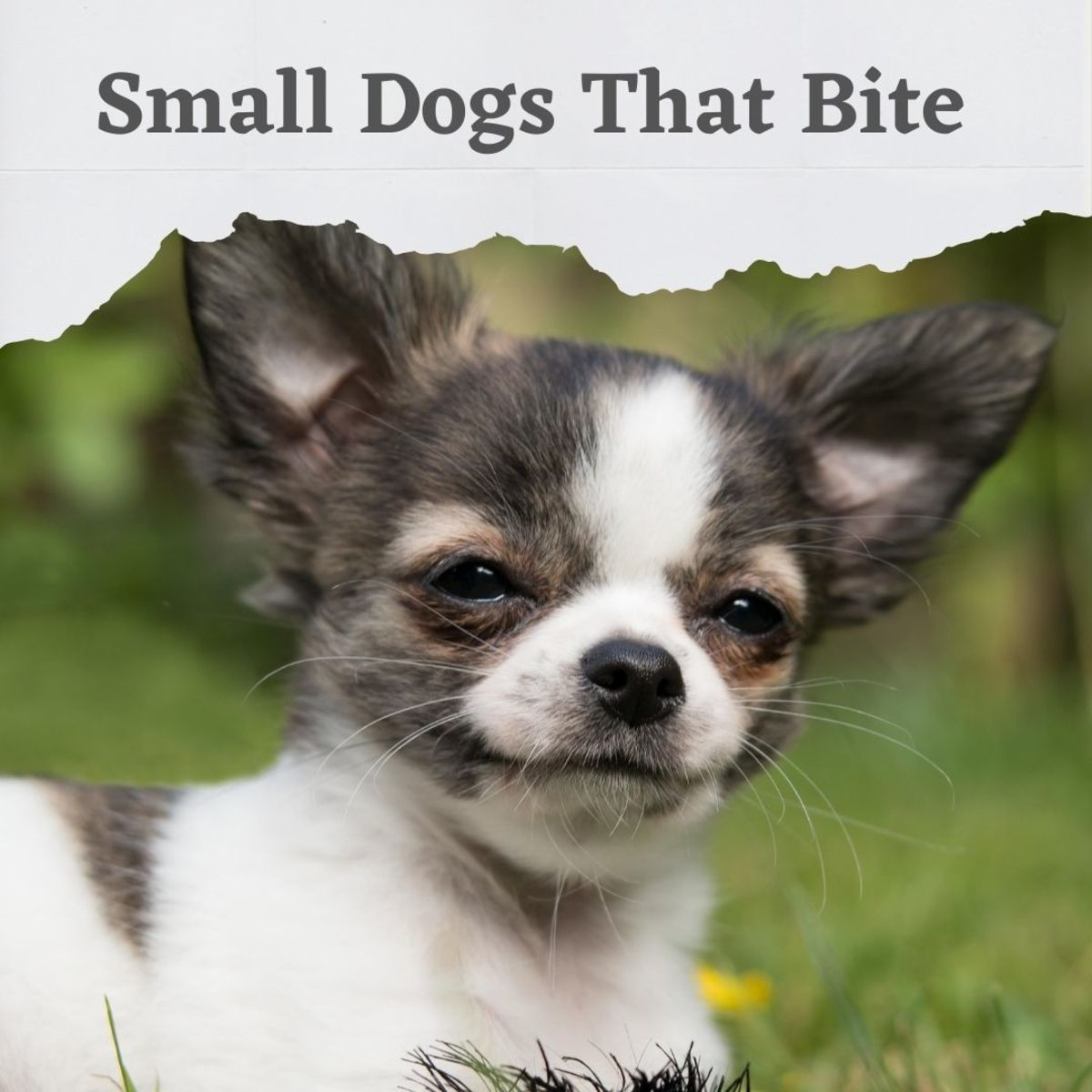 5 Dog Breeds That Bite but Are Almost Never Reported