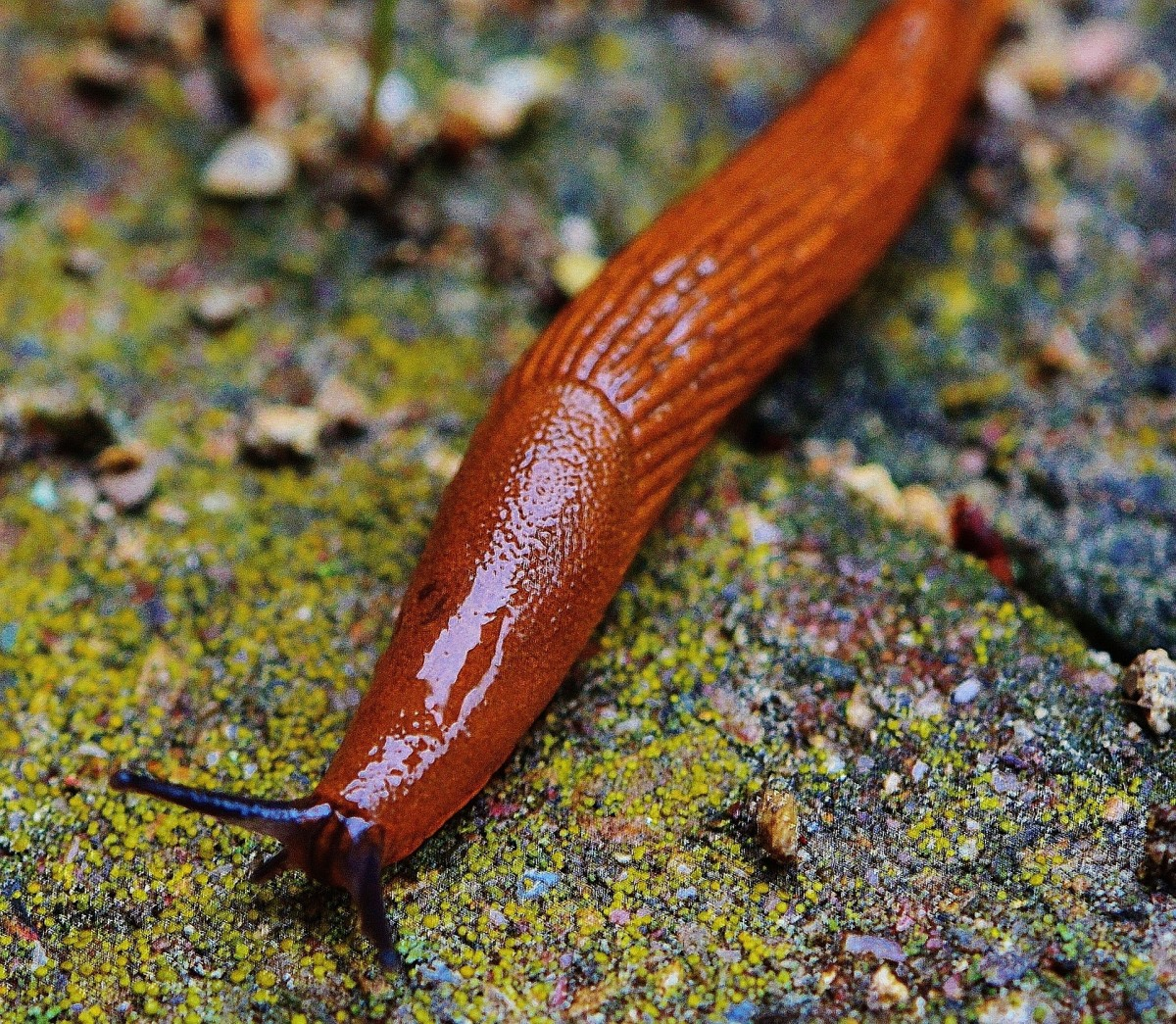 Get advice on caring for a pet slug, from housing to feeding to handling!