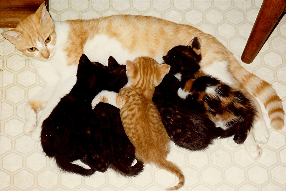 Angie and her five kittens