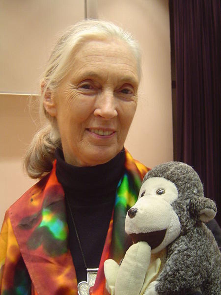 "Author, ""Gorillas in The Mist,"" Gorilla expert, Jane Goodall."