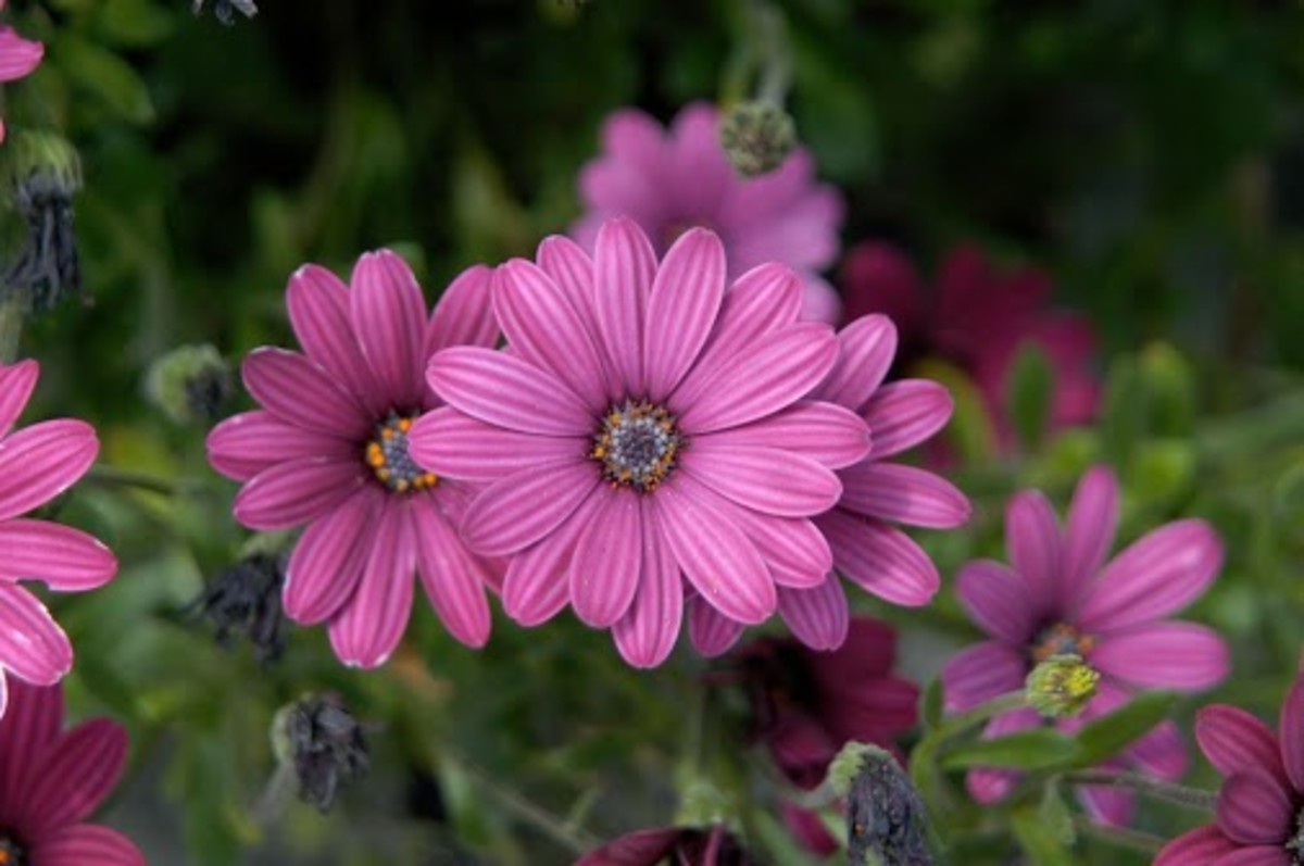 These pretty flower are just another beautiful sight that we find easily in spring time.