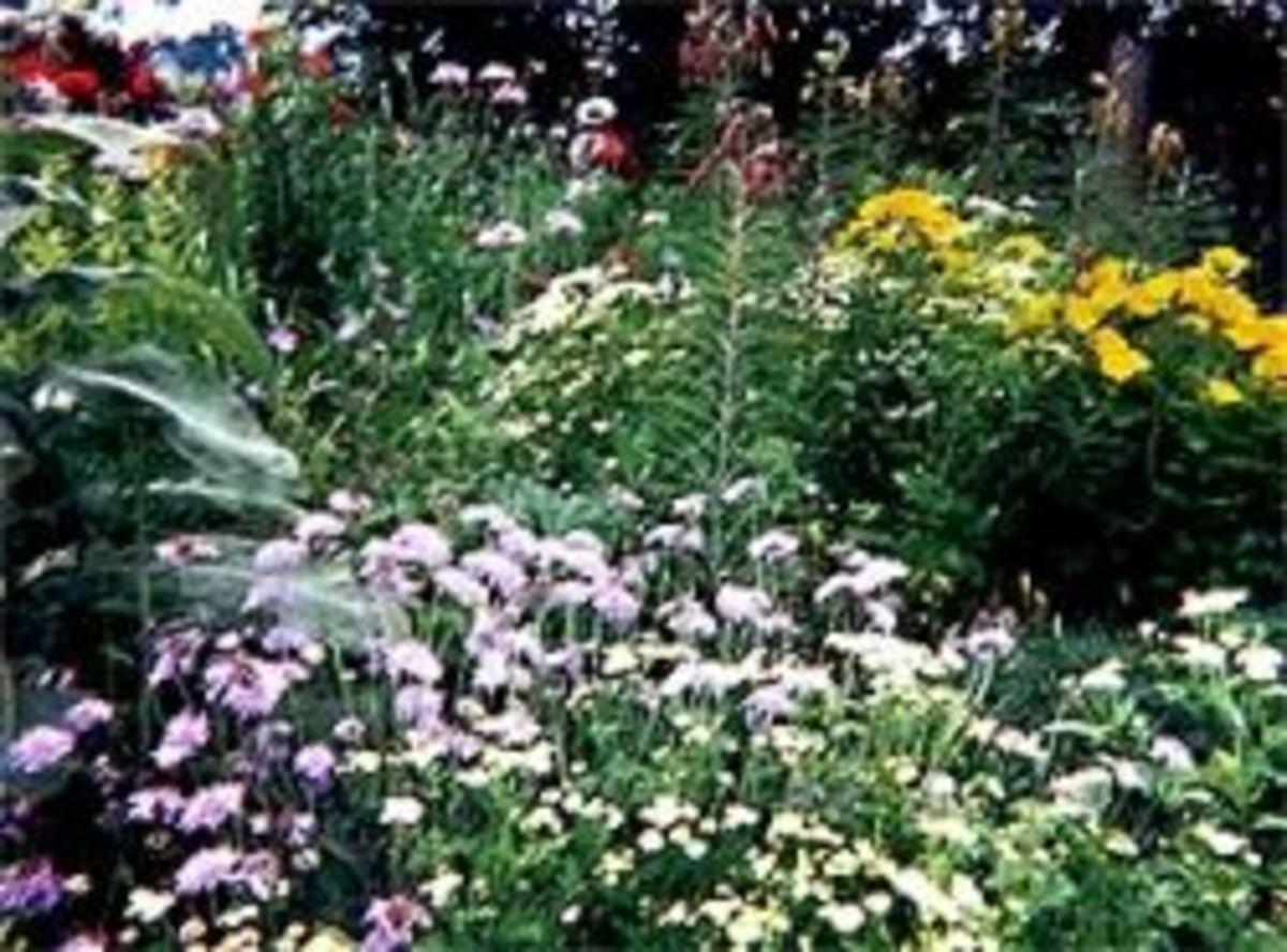 My garden, a decade ago