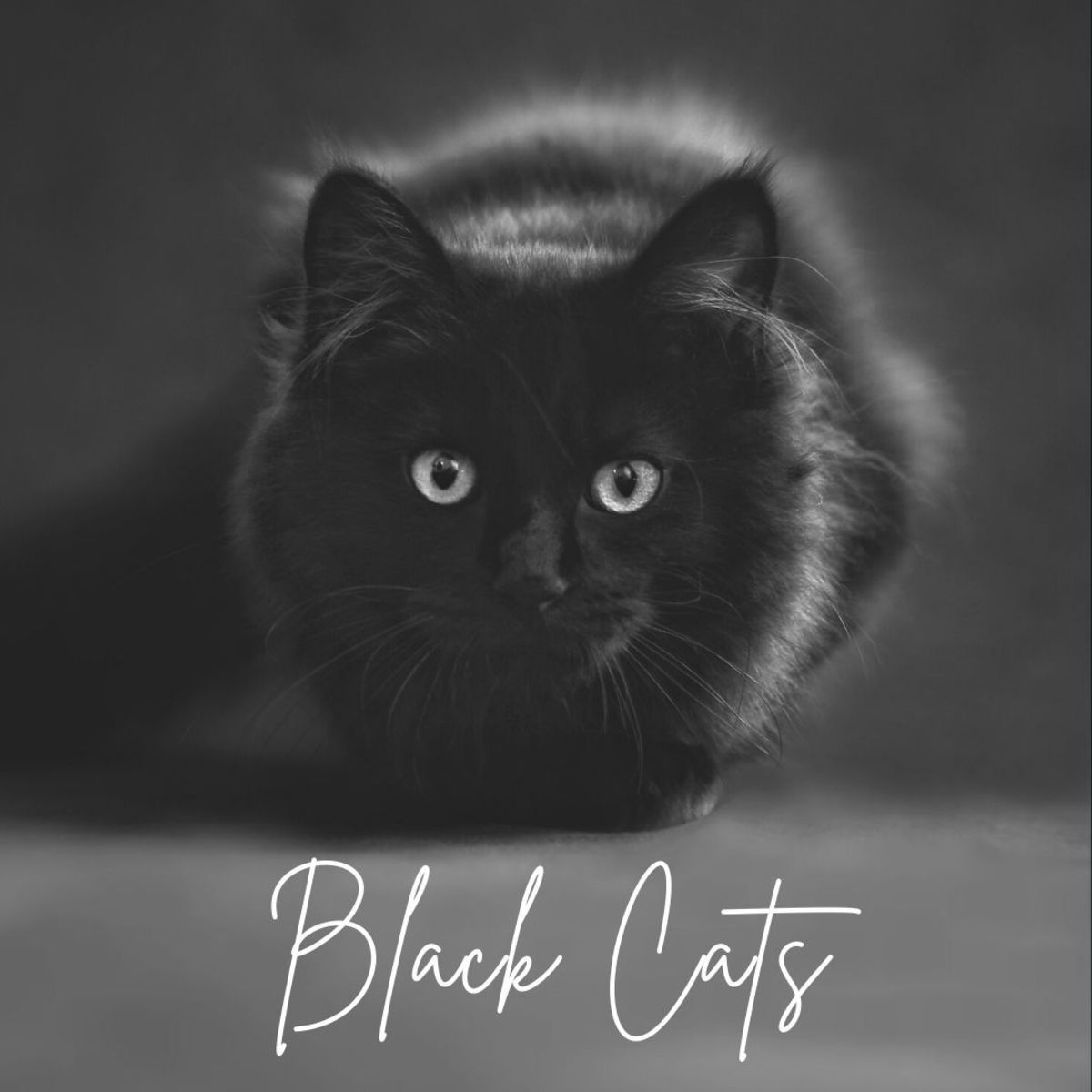 Black cats, throughout the ages, have symbolized the darker nature of humanity. Often seen as a companion of witches and practitioners of the occult, they were vilified and subjected to mass extermination.