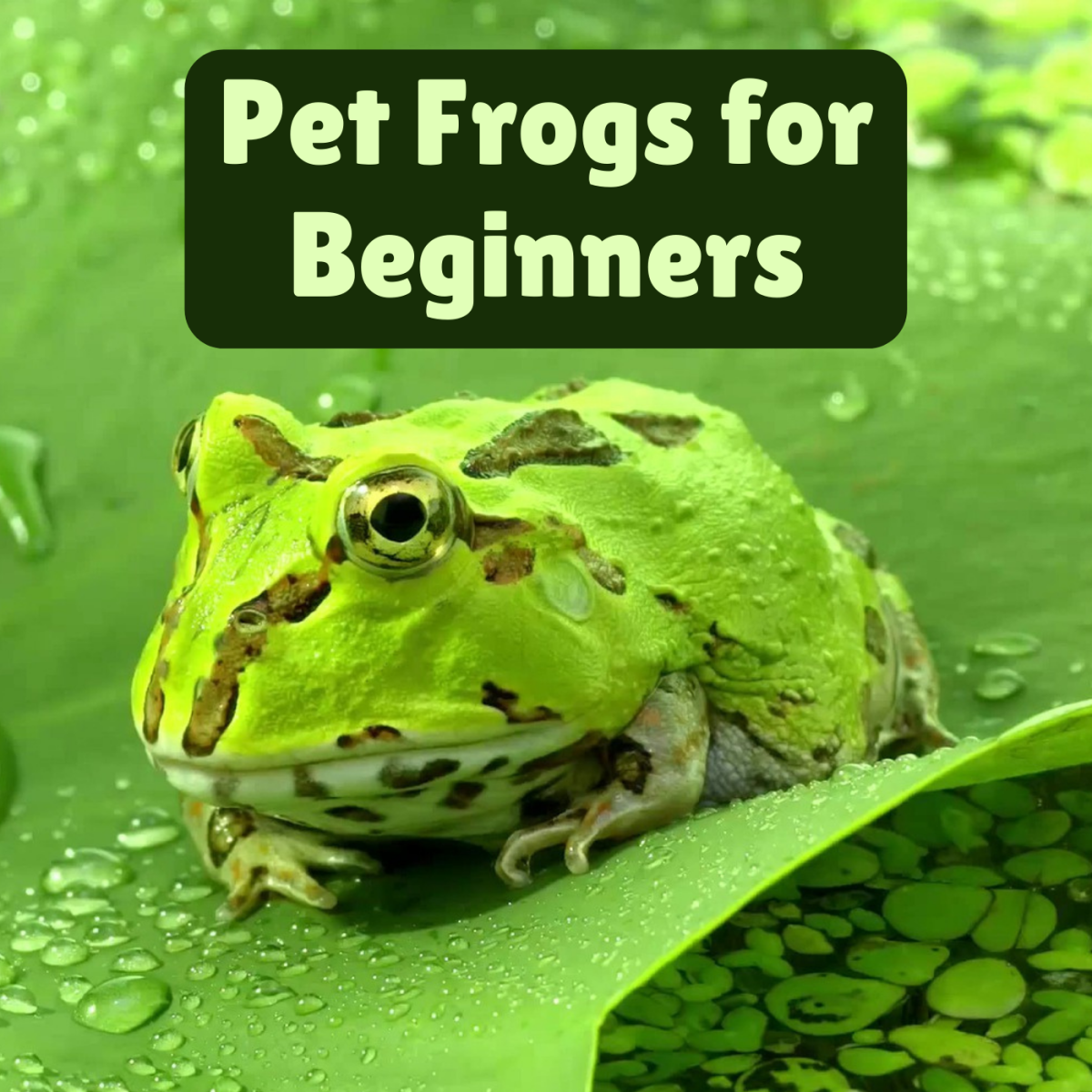7 Best Pet Frogs for Beginners