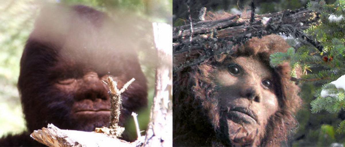 Photographs of Bigfoot?