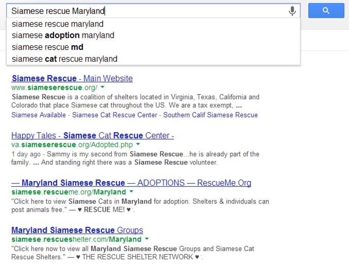 You can easily find any breed of cat you want through a local rescue group.  Just do a quick google search.