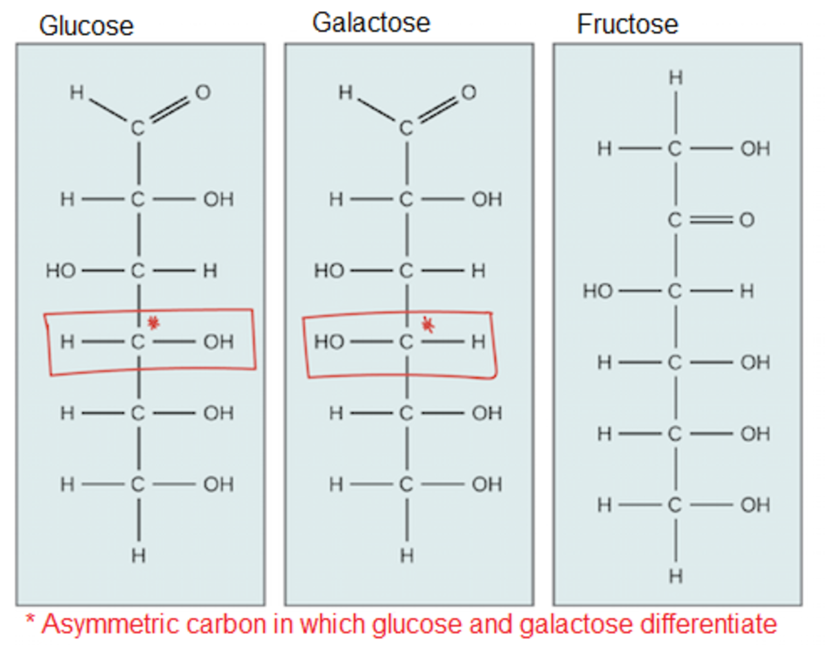 Glucose and galactose are stereoisomers, which means, their atoms are linked in the same order, but they have a different organization around one carbon. This difference is enough for the enzymes to be able to distinguish between them.