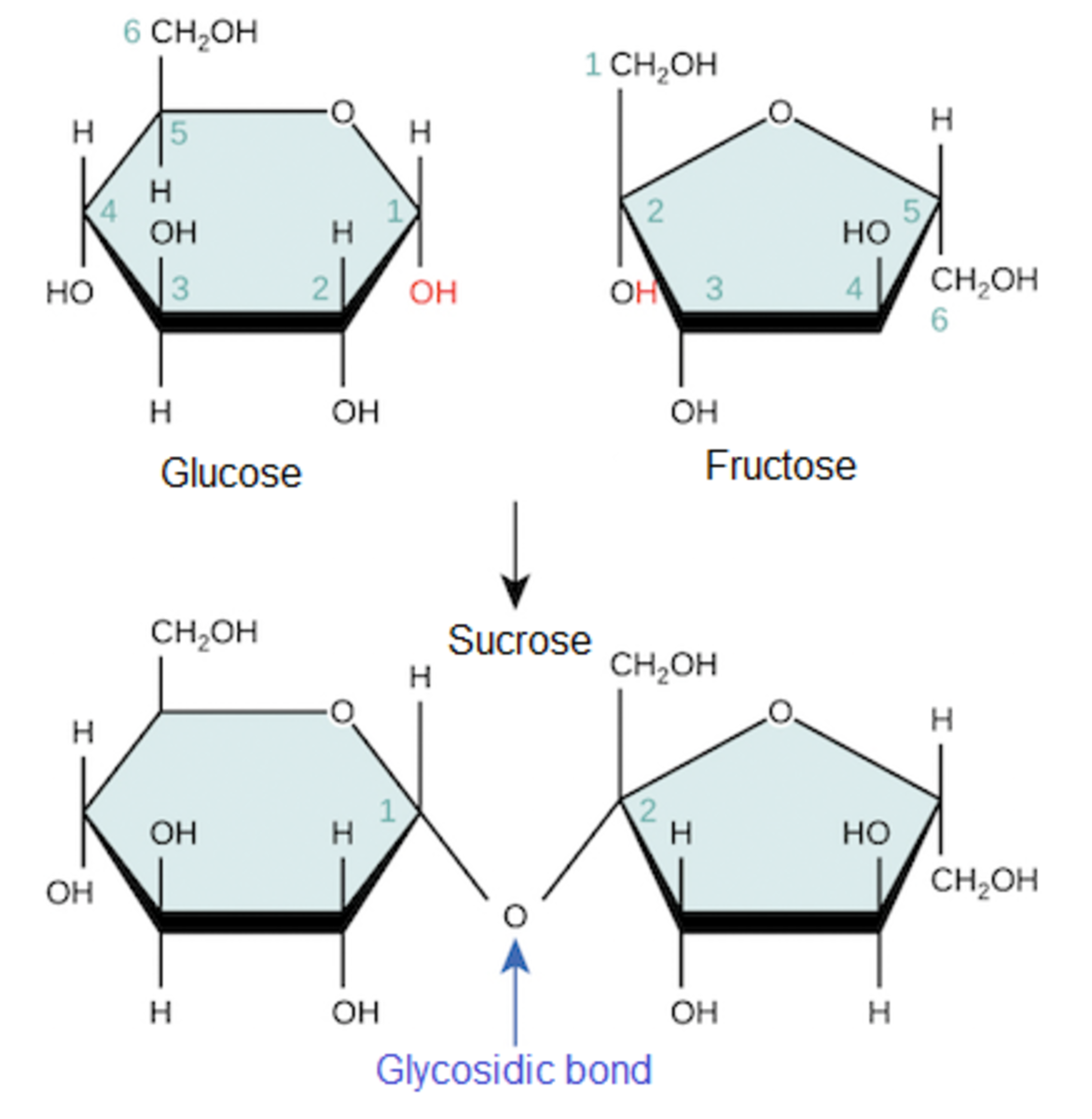 biology-2-chemical-bases-of-the-life