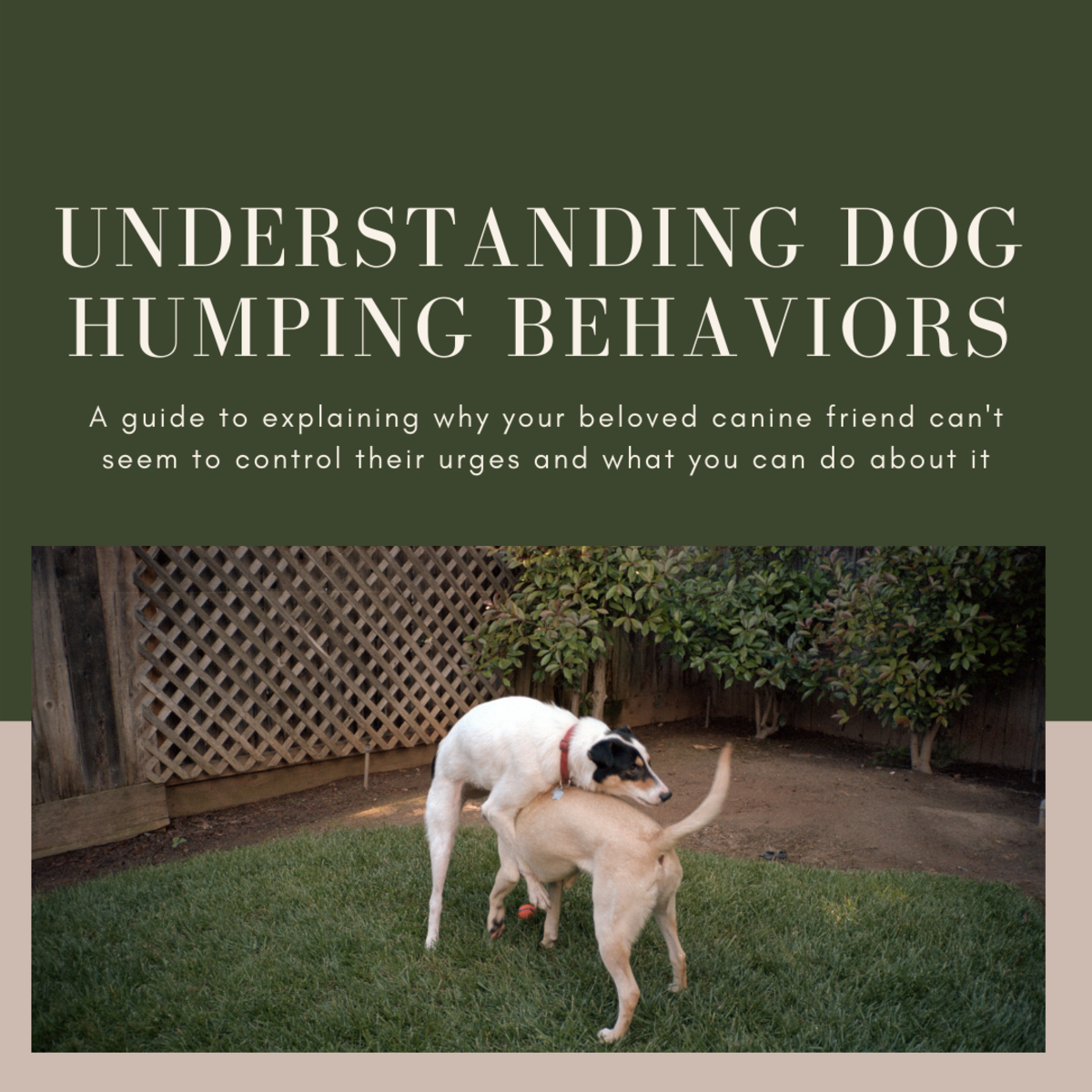 This guide will help you get a better understanding of why your dog may be repeatedly humping other dogs and what you can do about it.