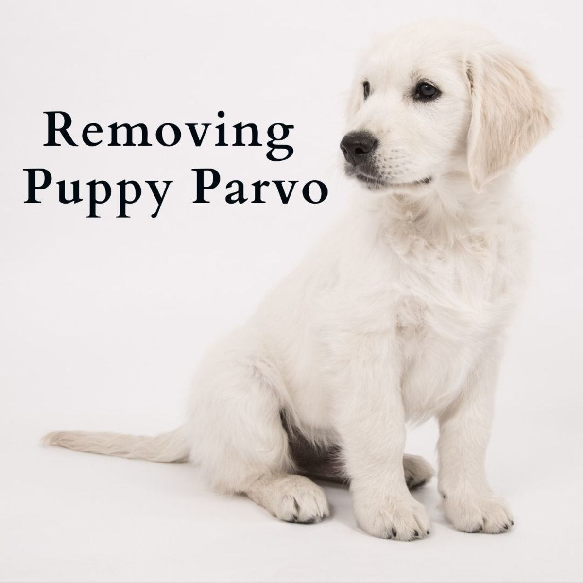 What you should know about parvovirus