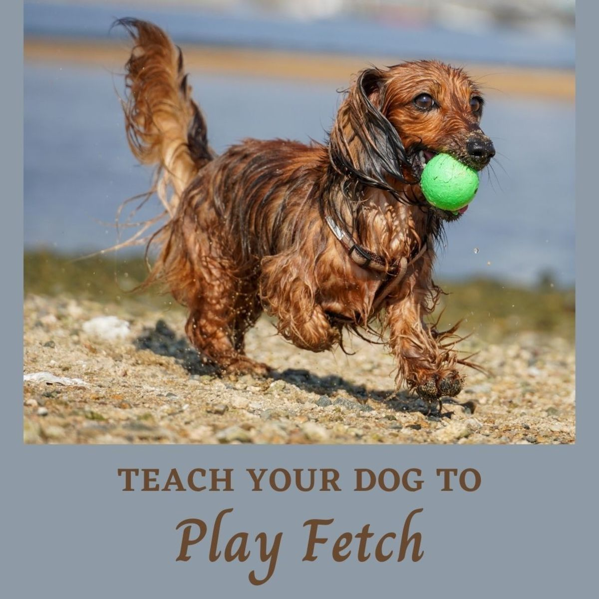 A how-to guide about teaching your dog to play fetch