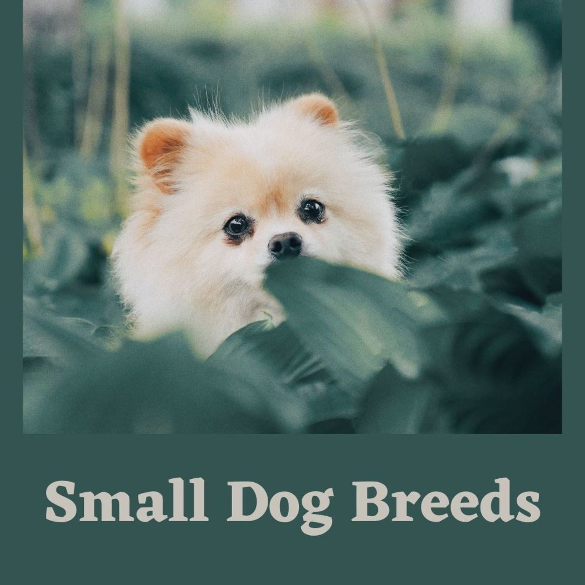 How to Care for Small Dog Breeds