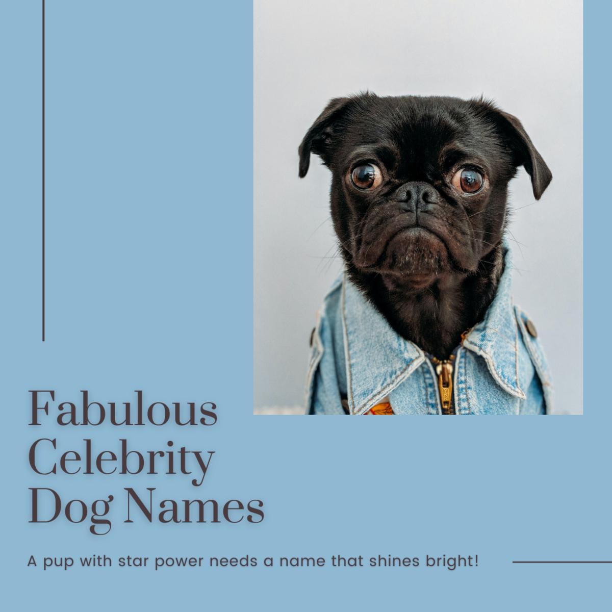 Celebrity Dog Names