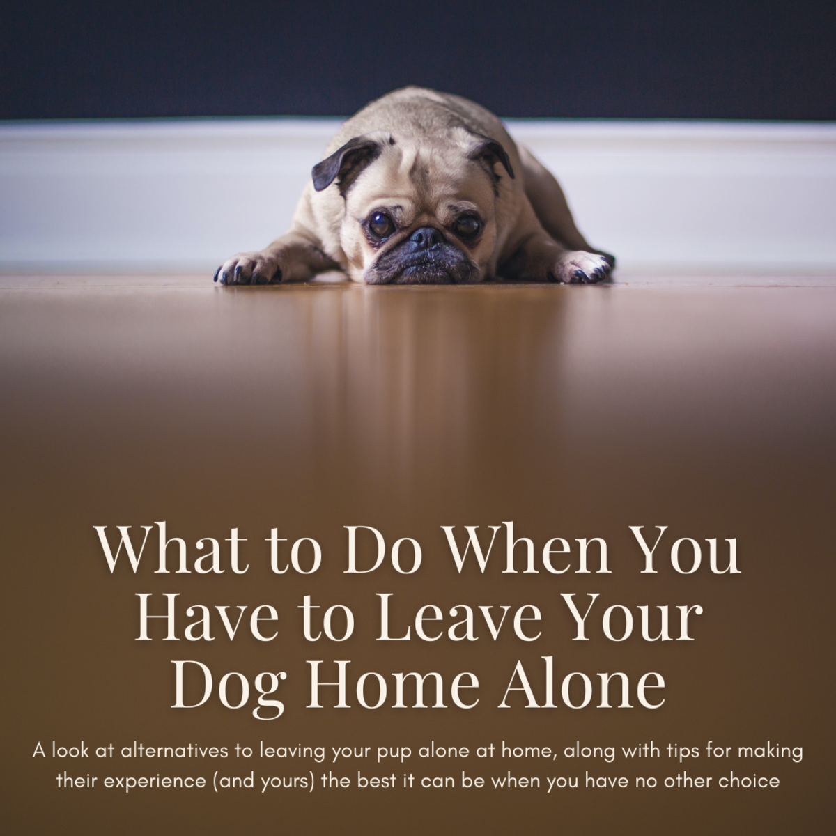 What to Do If You Have to Leave Your Dog Home Alone