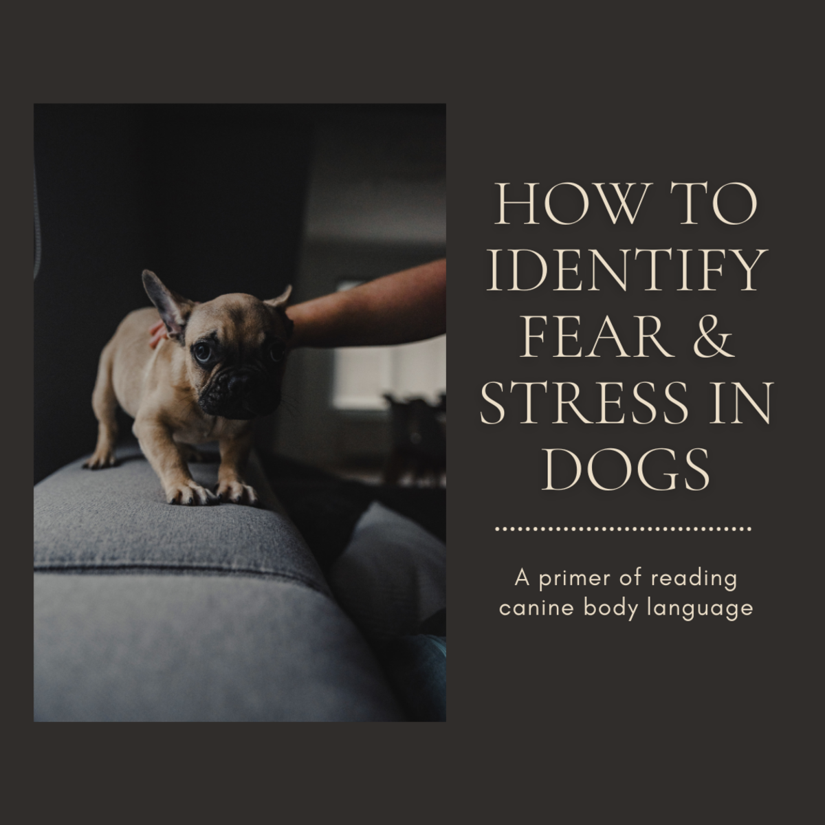 This article will provide information on how to read canine body language to help determine if a dog is scared or stressed.